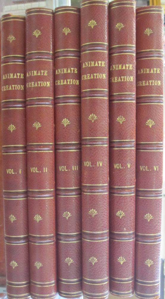 """Animate Creation; Popular Edition of """"Our Living World"""", A Natural History. Rev. J. G. - Revised Wood, adapted to American, M. D. Joseph B. Holder."""